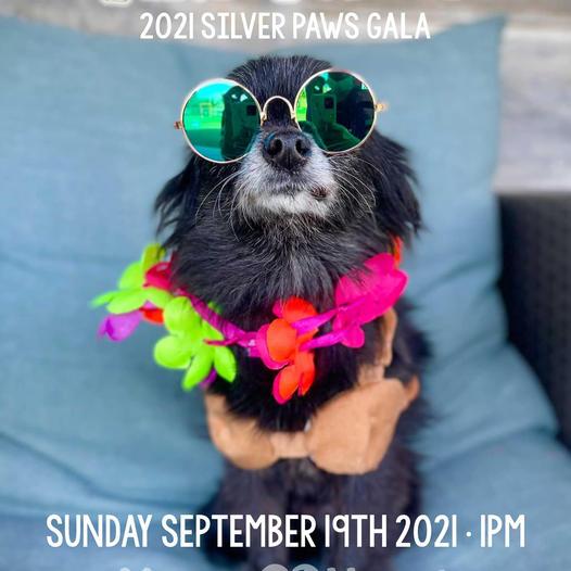 Silver Paws Gala 2021 Tiki Tails