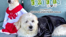 Silver Paws Gala 2020