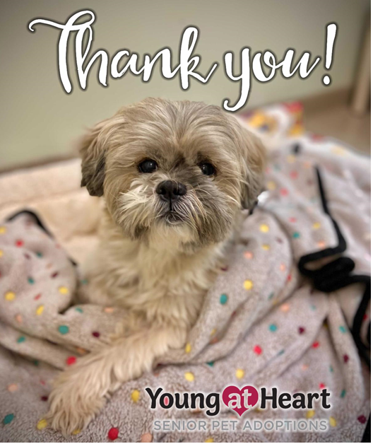Thank You From Young at Heart Senior Pet Rescue