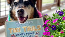 Save the Date for Silver Paws 2021!