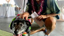 Silver Paws Tiki Tails a Huge Success!