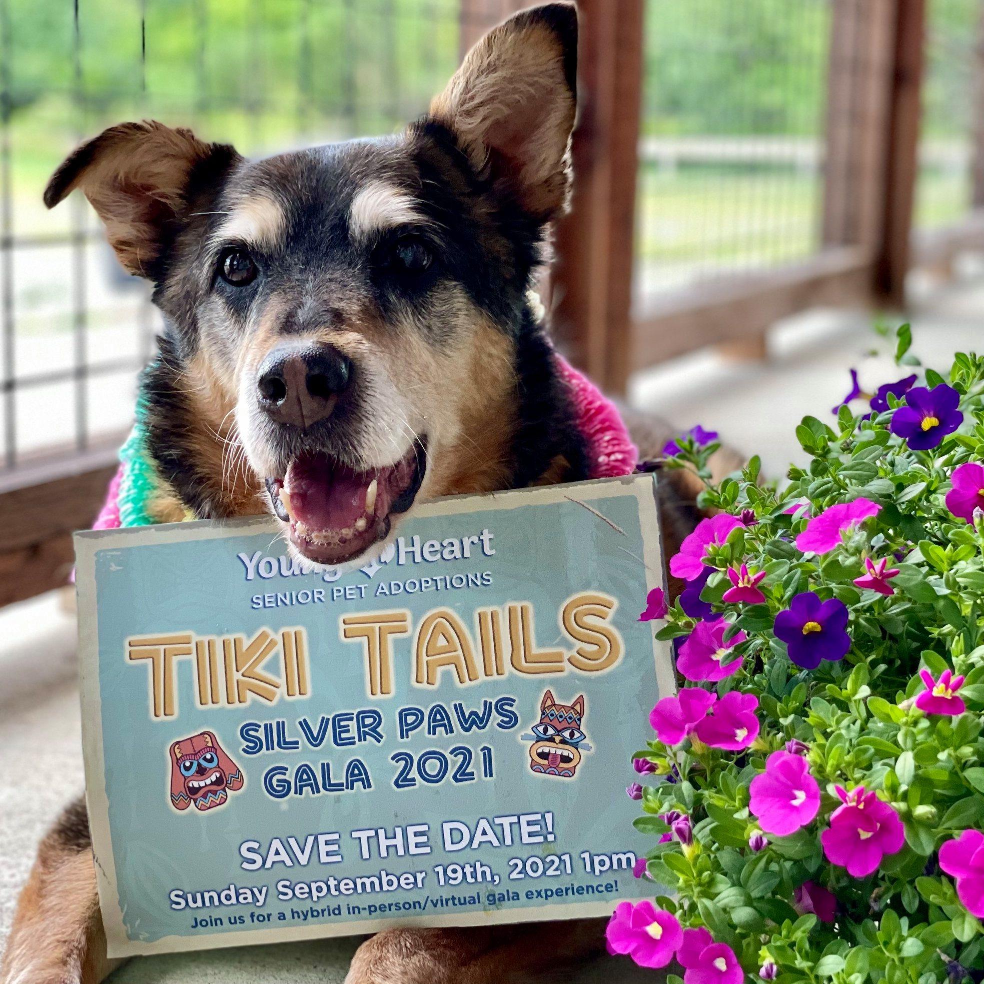 Tiki Tails Gala 2021